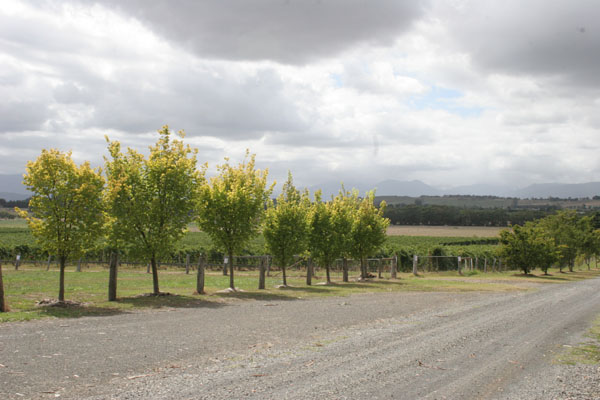 Yarra winery